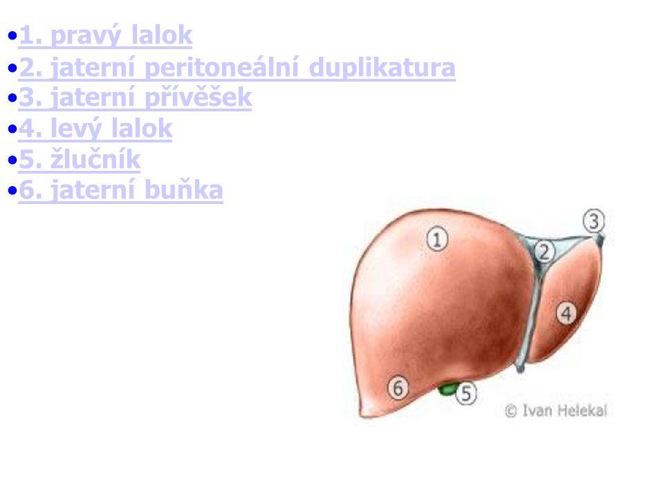 1.pravý lalok 2. jaterní peritoneální duplikatura 3.
