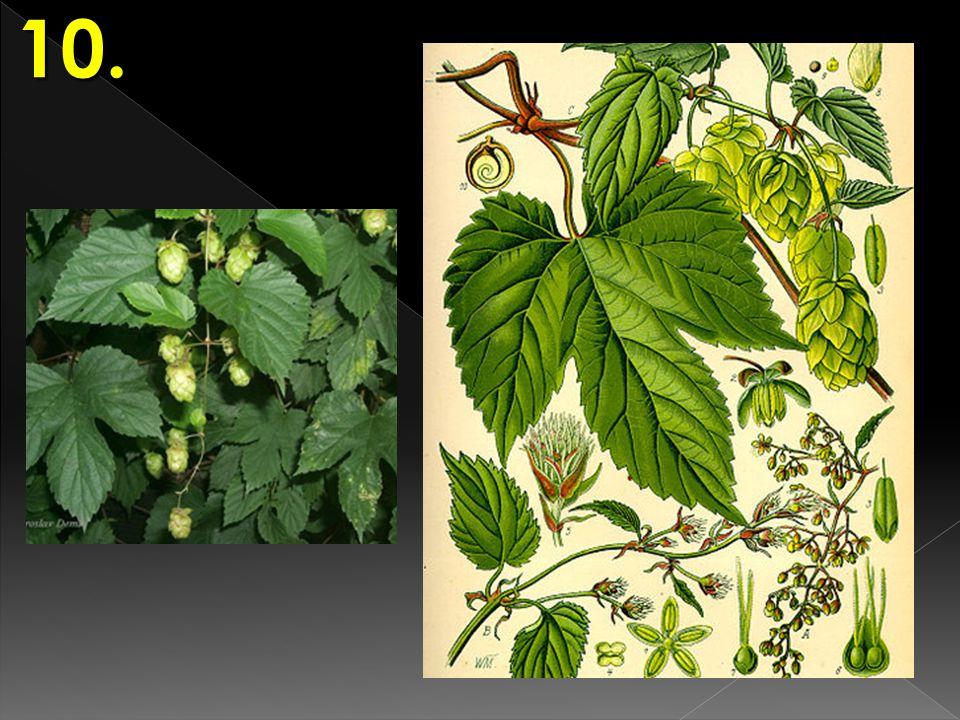 POZNÁVAČKA Rostliny III. Jméno a příjmení : Třída : Datum : 16 27 38 49 5 10101010 Hodnocení :