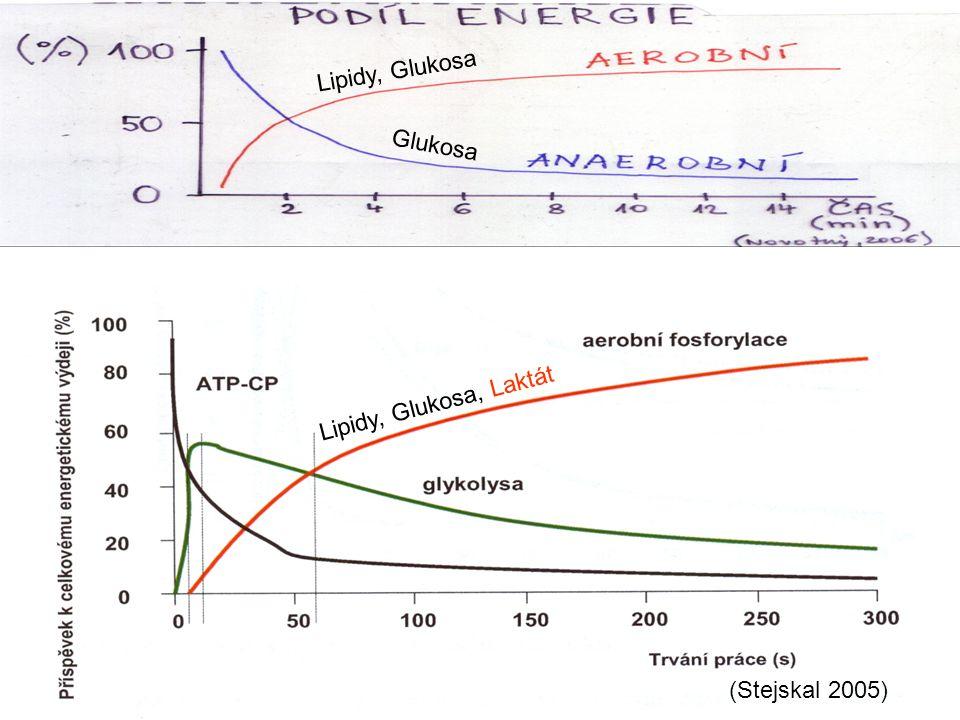 (Stejskal 2005) Lipidy, Glukosa Glukosa Lipidy, Glukosa, Laktát