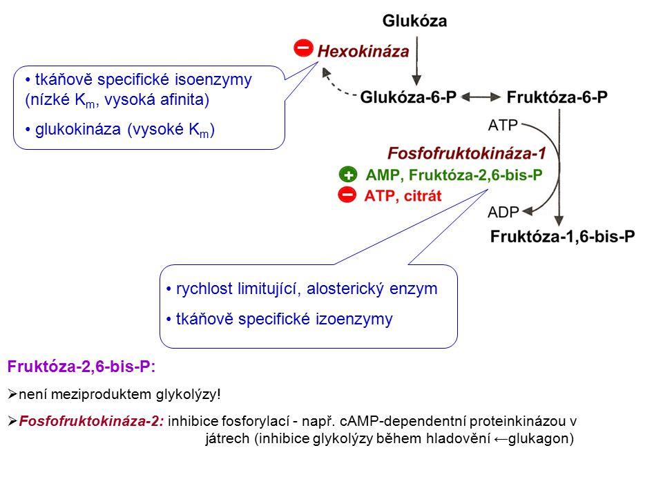 tkáňově specifické isoenzymy (nízké K m, vysoká afinita) glukokináza (vysoké K m ) rychlost limitující, alosterický enzym tkáňově specifické izoenzymy