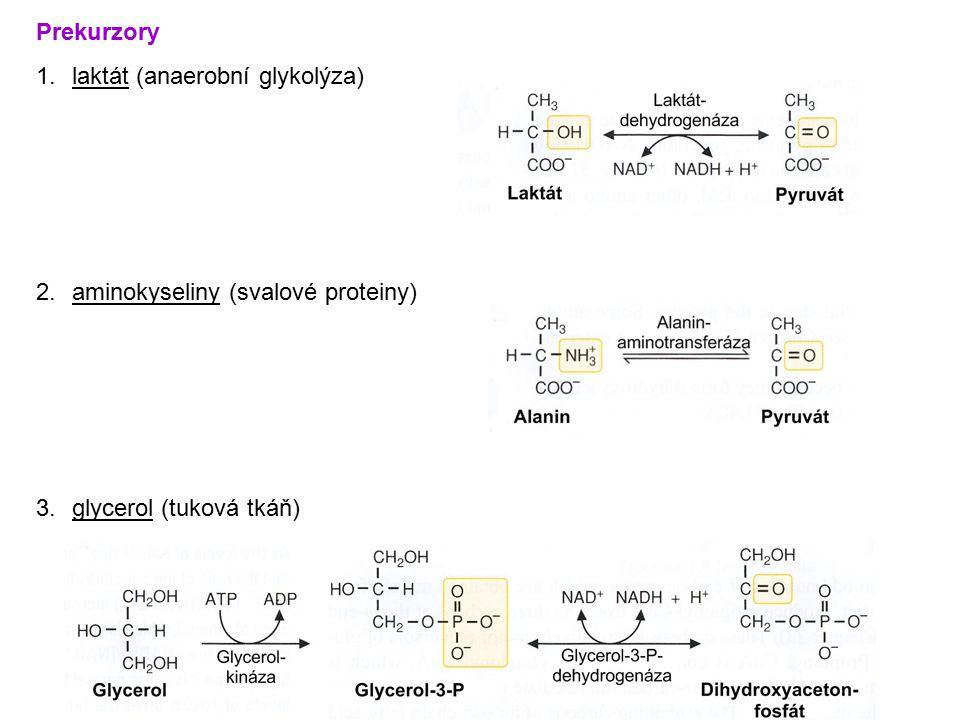 Prekurzory 1.laktát (anaerobní glykolýza) 2.aminokyseliny (svalové proteiny) 3.glycerol (tuková tkáň)