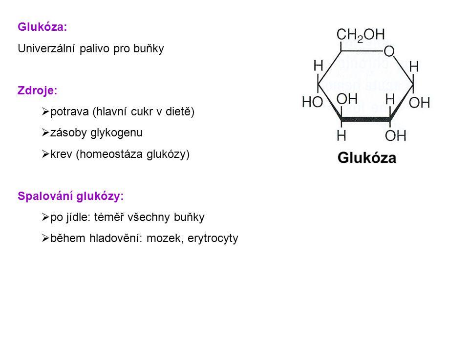 Glukóza: Univerzální palivo pro buňky Zdroje:  potrava (hlavní cukr v dietě)  zásoby glykogenu  krev (homeostáza glukózy) Spalování glukózy:  po j
