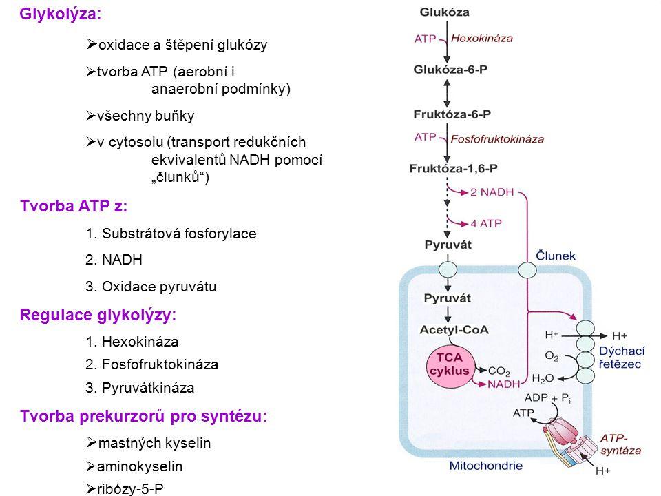 Glykolýza:  oxidace a štěpení glukózy  tvorba ATP (aerobní i anaerobní podmínky)  všechny buňky  v cytosolu (transport redukčních ekvivalentů NADH