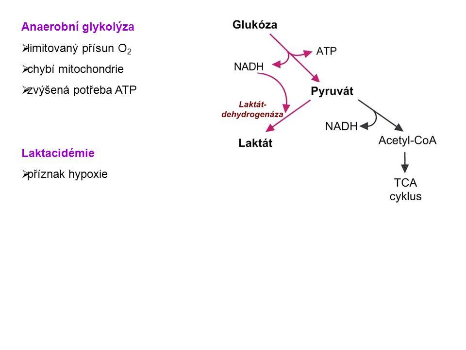 Anaerobní glykolýza  limitovaný přísun O 2  chybí mitochondrie  zvýšená potřeba ATP Laktacidémie  příznak hypoxie