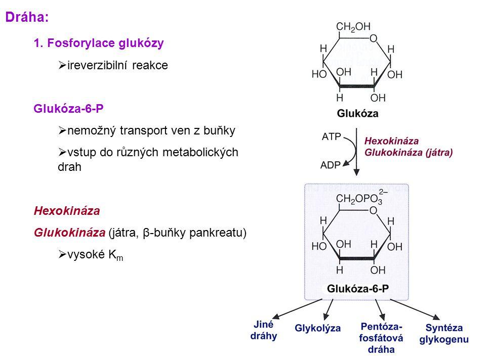 1. Fosforylace glukózy  ireverzibilní reakce Glukóza-6-P  nemožný transport ven z buňky  vstup do různých metabolických drah Hexokináza Glukokináza