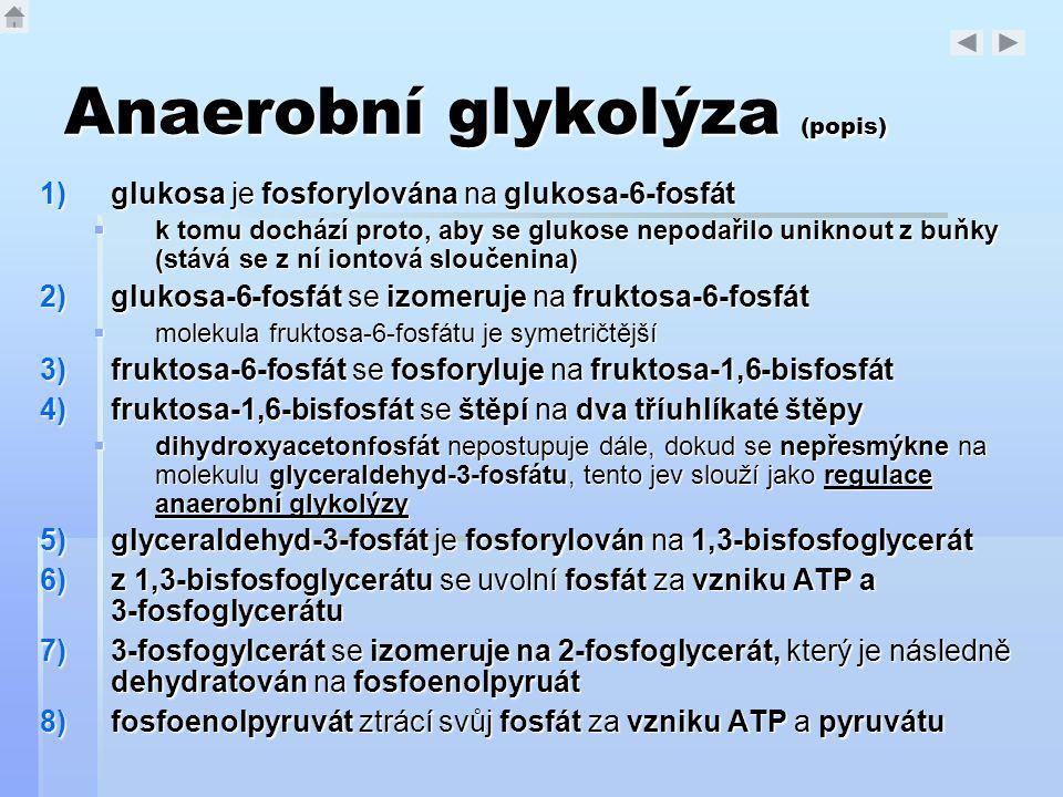 Anaerobní glykolýza (popis) 1)glukosa je fosforylována na glukosa-6-fosfát  k tomu dochází proto, aby se glukose nepodařilo uniknout z buňky (stává s