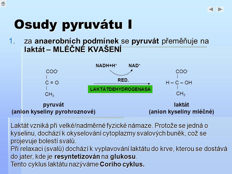 Osudy pyruvátu I 1.za anaerobních podmínek se pyruvát přeměňuje na laktát – MLÉČNÉ KVAŠENÍ COO - C = O CH 3 pyruvát (anion kyseliny pyrohroznové) LAKT