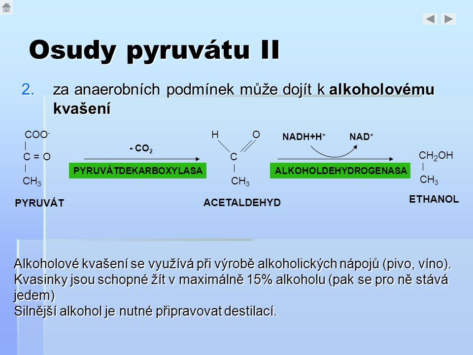 Osudy pyruvátu II 2.za anaerobních podmínek může dojít k alkoholovému kvašení COO - C = O CH 3 PYRUVÁT PYRUVÁTDEKARBOXYLASA - CO 2 C CH 3 HO ACETALDEH