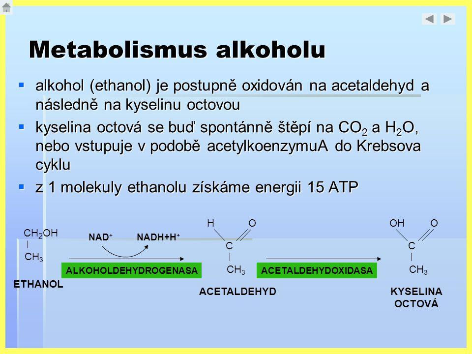 Metabolismus alkoholu  alkohol (ethanol) je postupně oxidován na acetaldehyd a následně na kyselinu octovou  kyselina octová se buď spontánně štěpí
