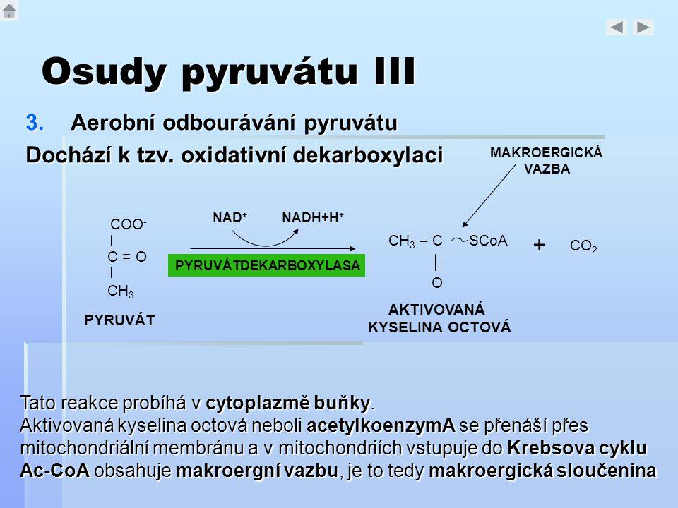 Osudy pyruvátu III 3.Aerobní odbourávání pyruvátu Dochází k tzv. oxidativní dekarboxylaci COO - C = O CH 3 PYRUVÁT PYRUVÁTDEKARBOXYLASA NADH+H + NAD +