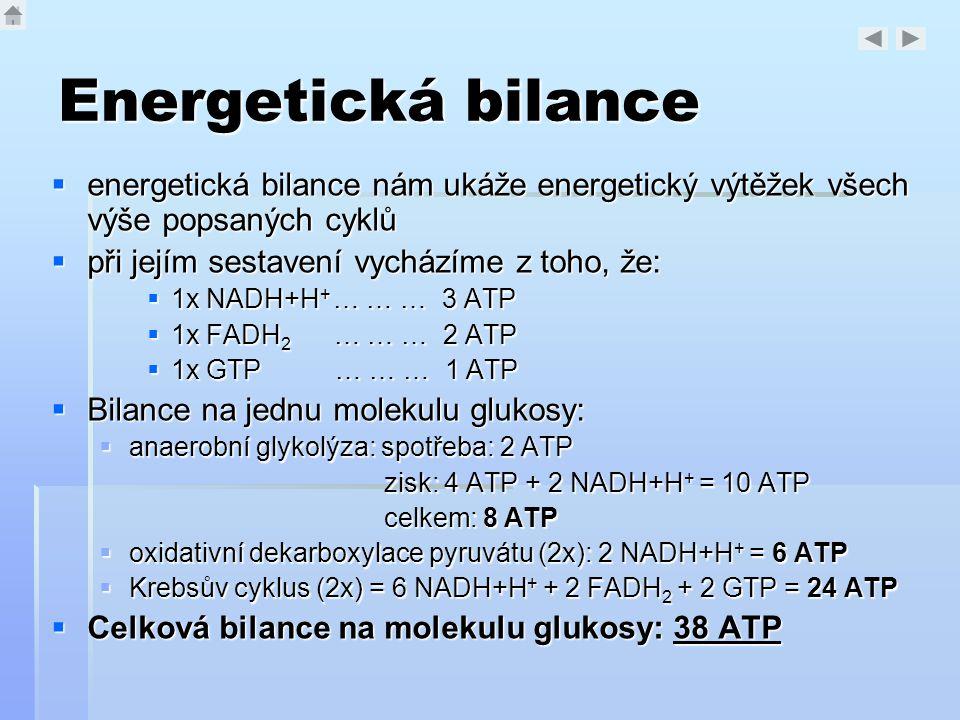 Energetická bilance  energetická bilance nám ukáže energetický výtěžek všech výše popsaných cyklů  při jejím sestavení vycházíme z toho, že:  1x NA