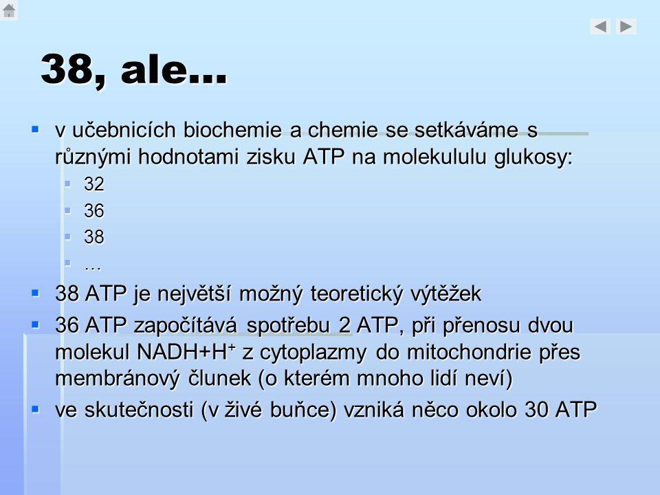 38, ale…  v učebnicích biochemie a chemie se setkáváme s různými hodnotami zisku ATP na molekululu glukosy:  32  36  38 …………  38 ATP je nejvě