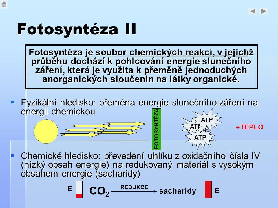 Fotosyntéza II  Fyzikální hledisko: přeměna energie slunečního záření na energii chemickou  Chemické hledisko: převedení uhlíku z oxidačního čísla I