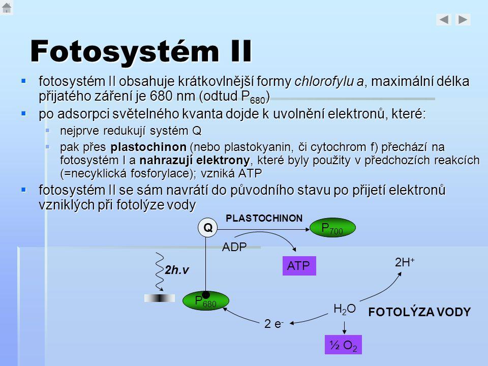 Fotosystém II  fotosystém II obsahuje krátkovlnější formy chlorofylu a, maximální délka přijatého záření je 680 nm (odtud P 680 )  po adsorpci světe