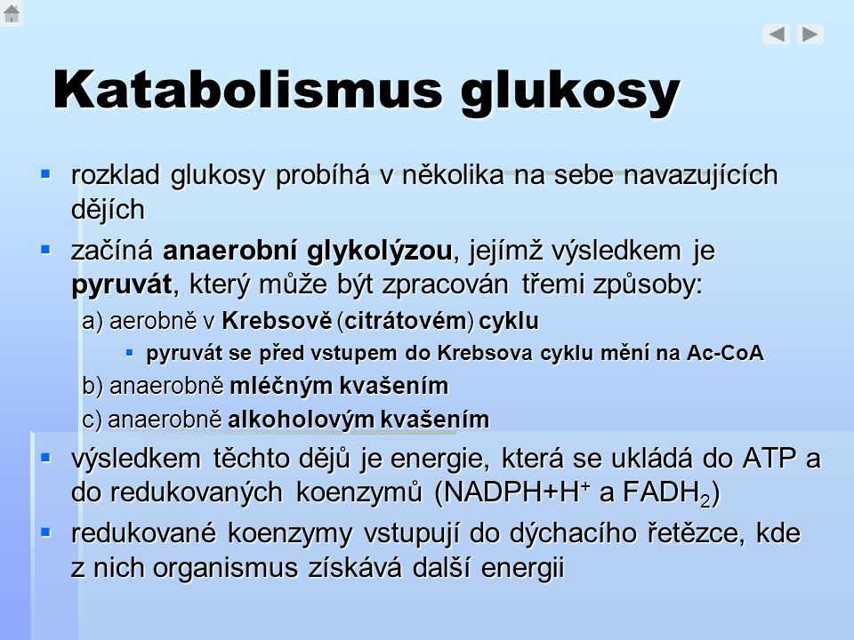 Katabolismus glukosy  rozklad glukosy probíhá v několika na sebe navazujících dějích  začíná anaerobní glykolýzou, jejímž výsledkem je pyruvát, kter