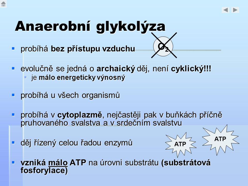 Anaerobní glykolýza  probíhá bez přístupu vzduchu  evolučně se jedná o archaický děj, není cyklický!!!  je málo energeticky výnosný  probíhá u vše