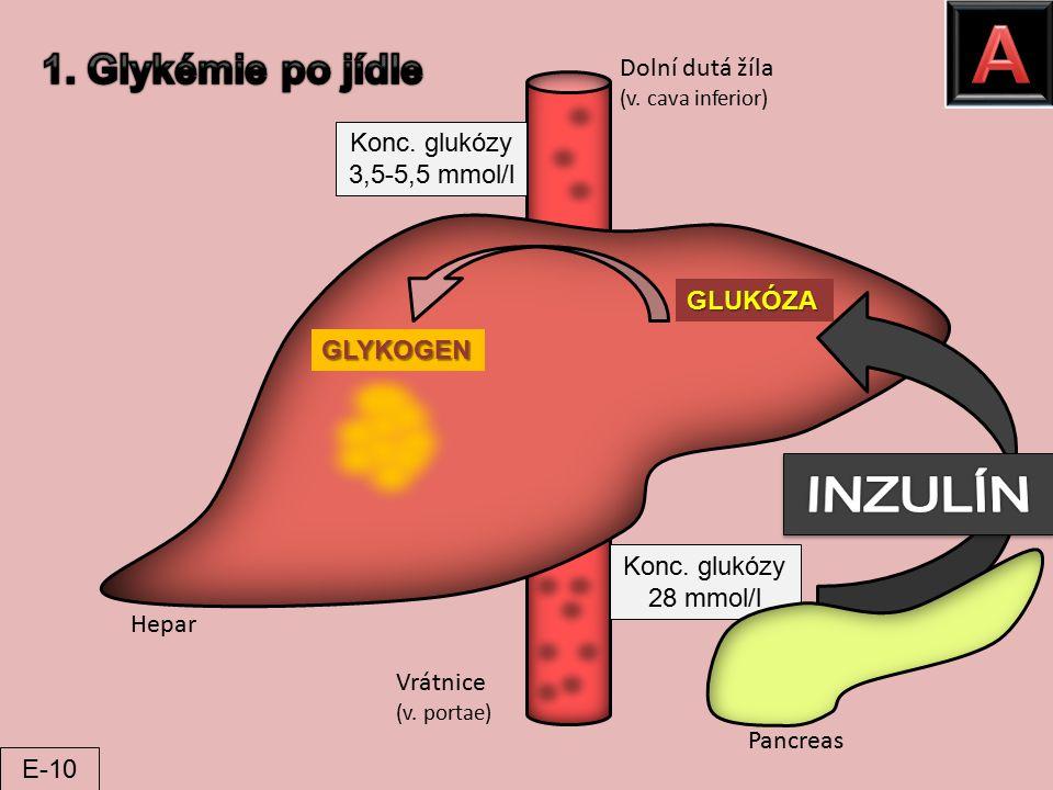 Pancreas Hepar Vrátnice (v. portae) Dolní dutá žíla (v. cava inferior) GLUKÓZA GLYKOGEN Konc. glukózy 28 mmol/l Konc. glukózy 3,5-5,5 mmol/l E-10