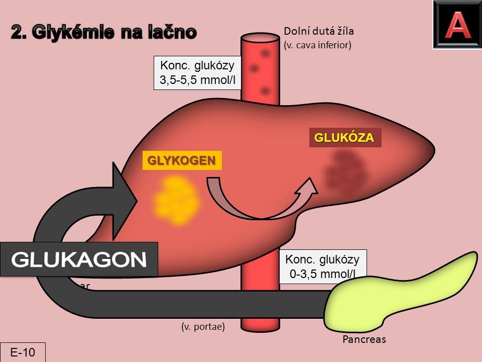 Pancreas Hepar Vrátnice (v. portae) Dolní dutá žíla (v. cava inferior) GLUKÓZA GLYKOGEN Konc. glukózy 0-3,5 mmol/l Konc. glukózy 3,5-5,5 mmol/l E-10