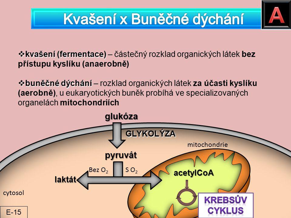  kvašení (fermentace)  kvašení (fermentace) – částečný rozklad organických látek bez přístupu kyslíku (anaerobně)  buněčné dýchání  buněčné dýchán