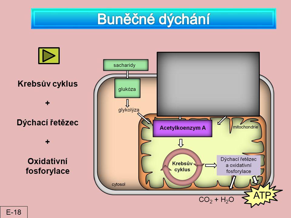 CO 2 + H 2 O ATP Krebsův cyklus + Dýchací řetězec + Oxidativní fosforylace E-18