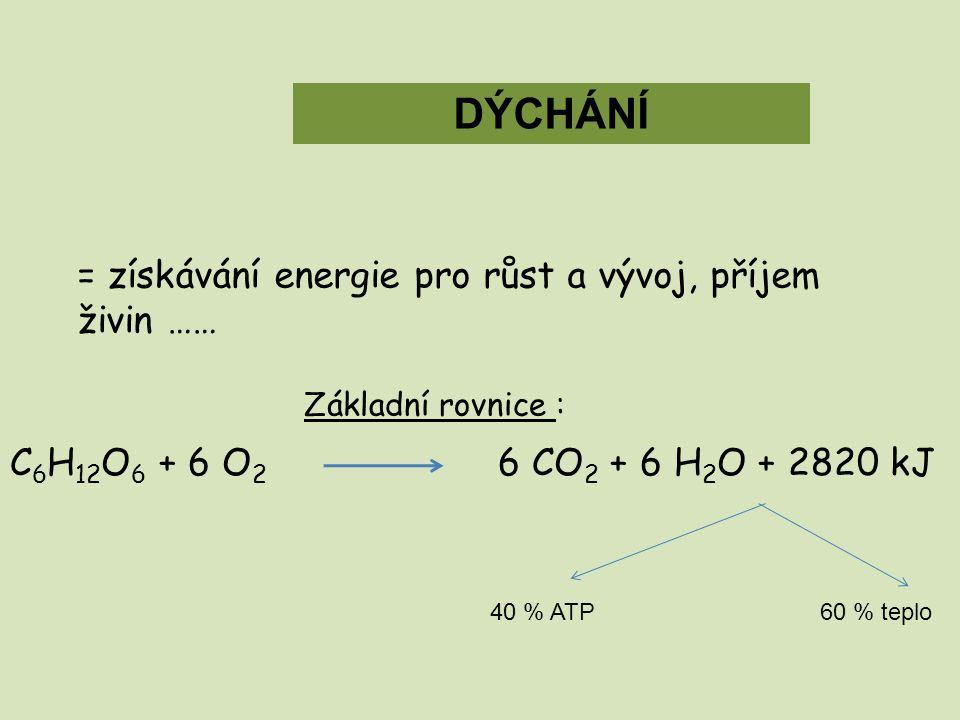 DÝCHÁNÍ = získávání energie pro růst a vývoj, příjem živin …… Základní rovnice : C 6 H 12 O 6 + 6 O 2 6 CO 2 + 6 H 2 O + 2820 kJ 40 % ATP60 % teplo
