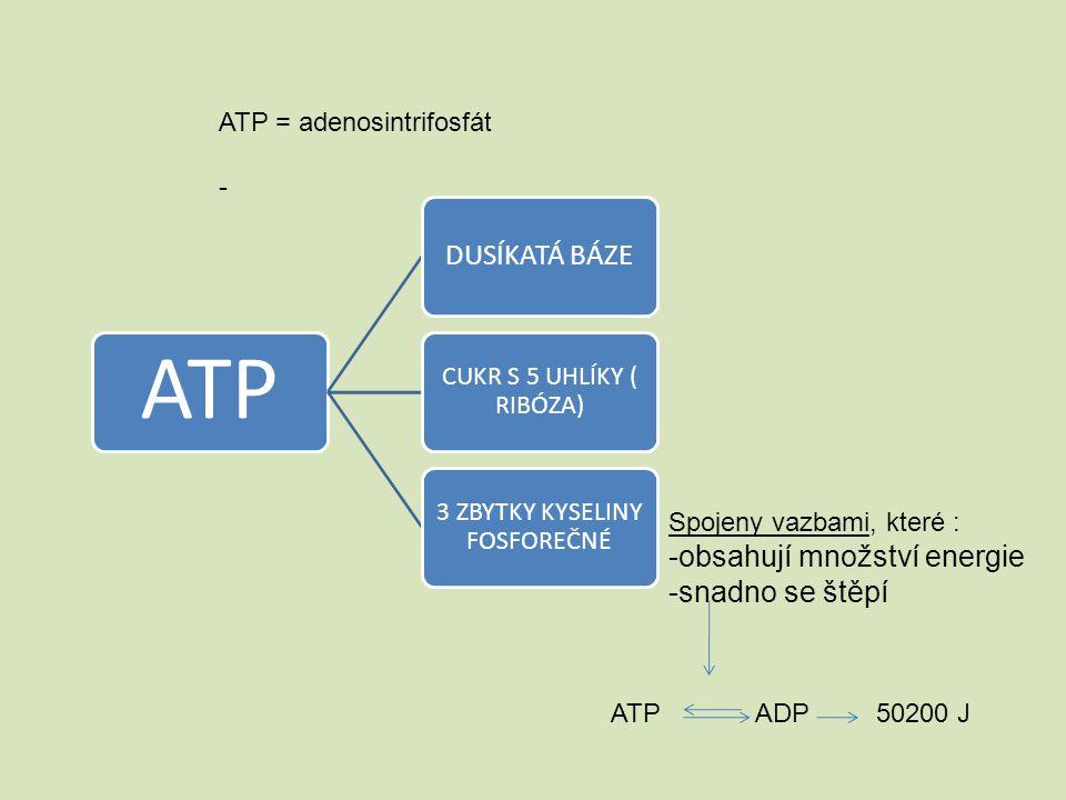 ATP = adenosintrifosfát - ATP DUSÍKATÁ BÁZE CUKR S 5 UHLÍKY ( RIBÓZA) 3 ZBYTKY KYSELINY FOSFOREČNÉ Spojeny vazbami, které : -obsahují množství energie