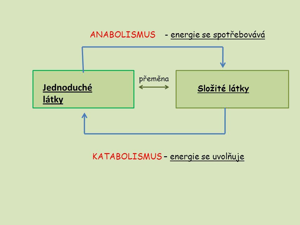 přeměna Jednoduché látky Složité látky ANABOLISMUS - energie se spotřebovává KATABOLISMUS – energie se uvolňuje