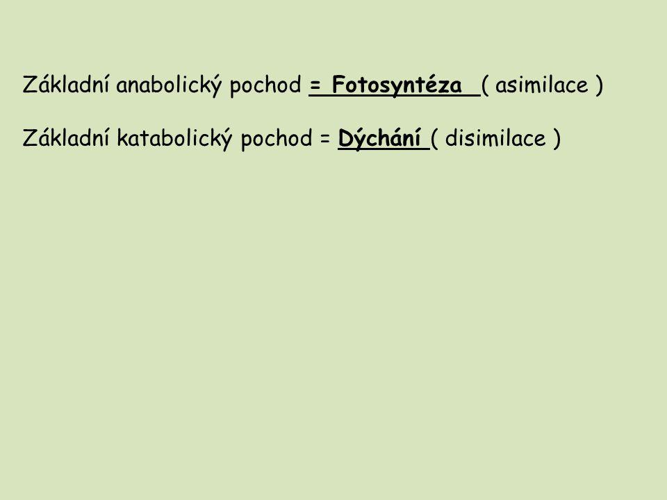 Základní anabolický pochod = Fotosyntéza ( asimilace ) Základní katabolický pochod = Dýchání ( disimilace )
