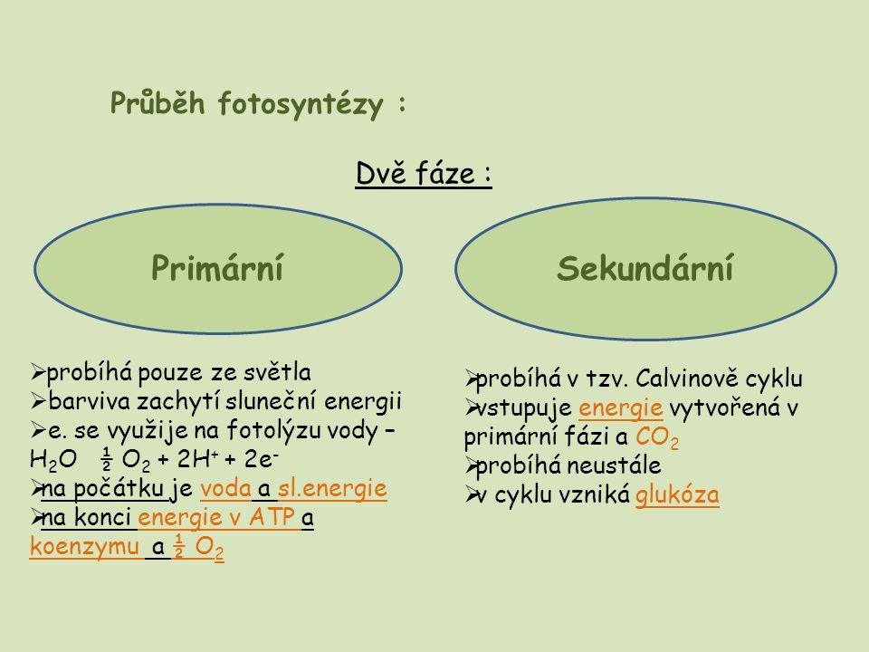Průběh fotosyntézy : Dvě fáze : Primární Sekundární  probíhá pouze ze světla  barviva zachytí sluneční energii  e. se využije na fotolýzu vody – H