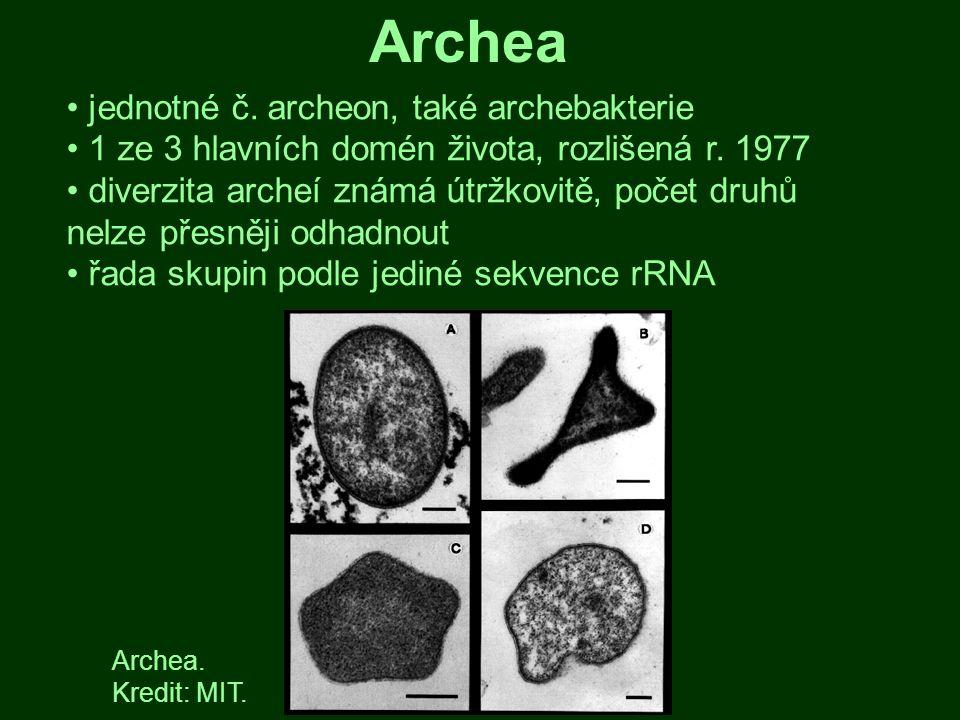 jednotné č. archeon, také archebakterie 1 ze 3 hlavních domén života, rozlišená r. 1977 diverzita archeí známá útržkovitě, počet druhů nelze přesněji