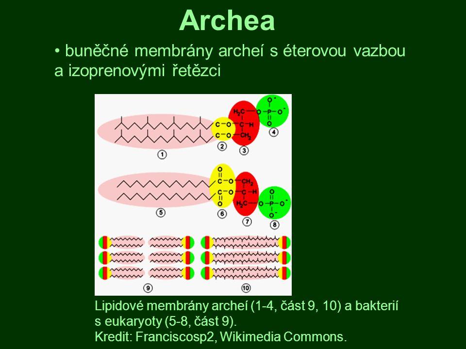 buněčné membrány archeí s éterovou vazbou a izoprenovými řetězci Lipidové membrány archeí (1-4, část 9, 10) a bakterií s eukaryoty (5-8, část 9). Kred
