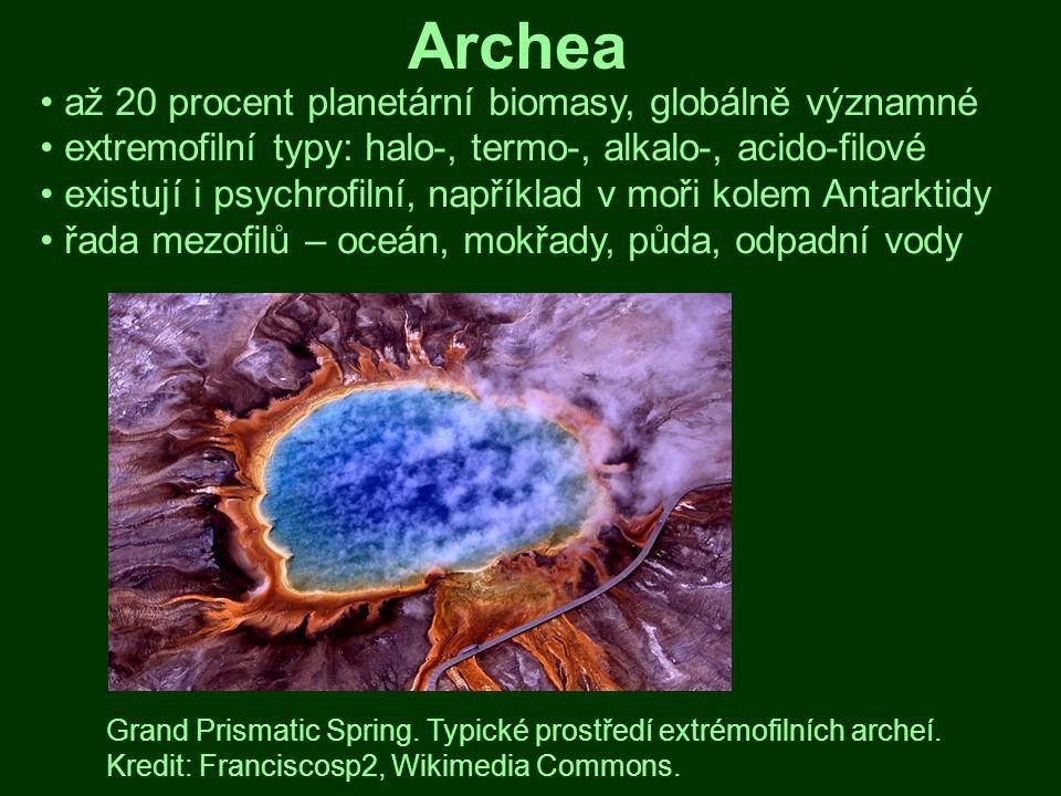 Archea až 20 procent planetární biomasy, globálně významné extremofilní typy: halo-, termo-, alkalo-, acido-filové existují i psychrofilní, například