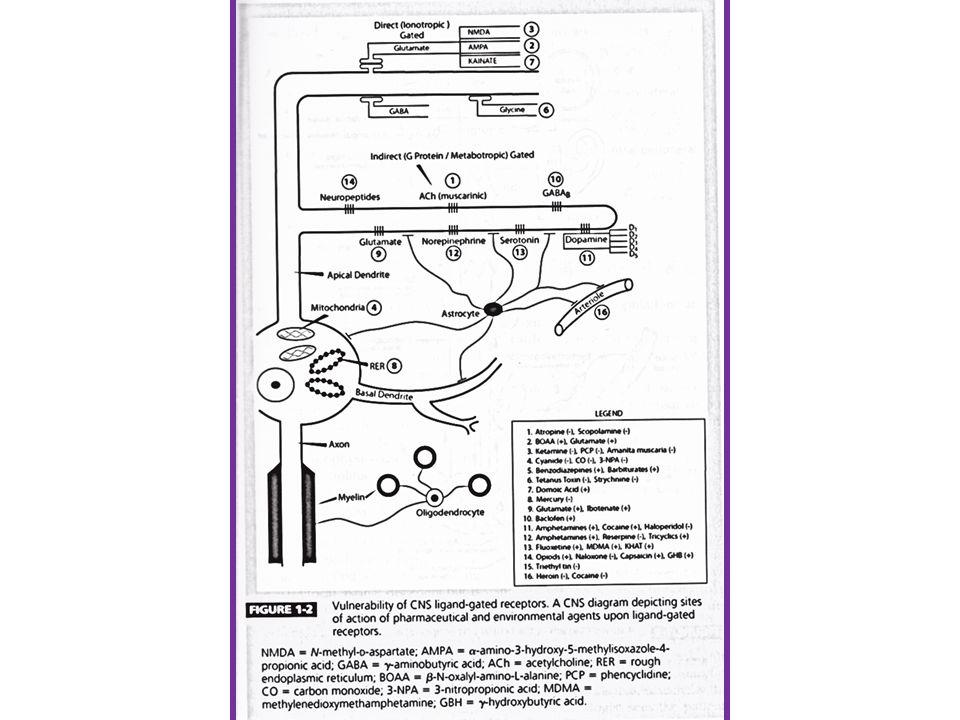 Botulismus - botulotoxin Clostridium botulinum Botulotoxin A-F (použití v terapii A,B) Anaerobní baktérie, klobásy, zelenina Med (USA) 0.5-6 dnů po požití toxinu Nikotinové i muskarinové příznaky Gastrointestinální potíže