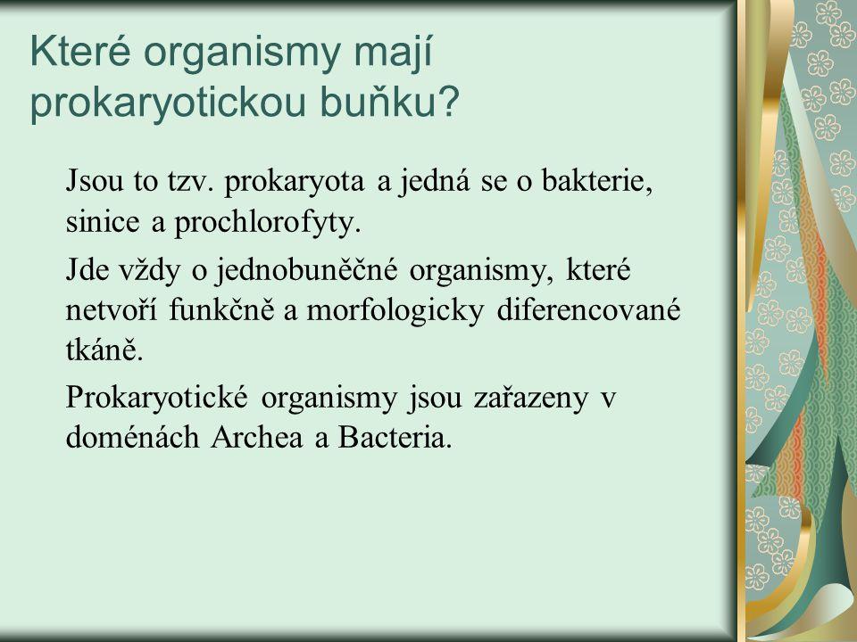 Ribozomy – obr.č.5.