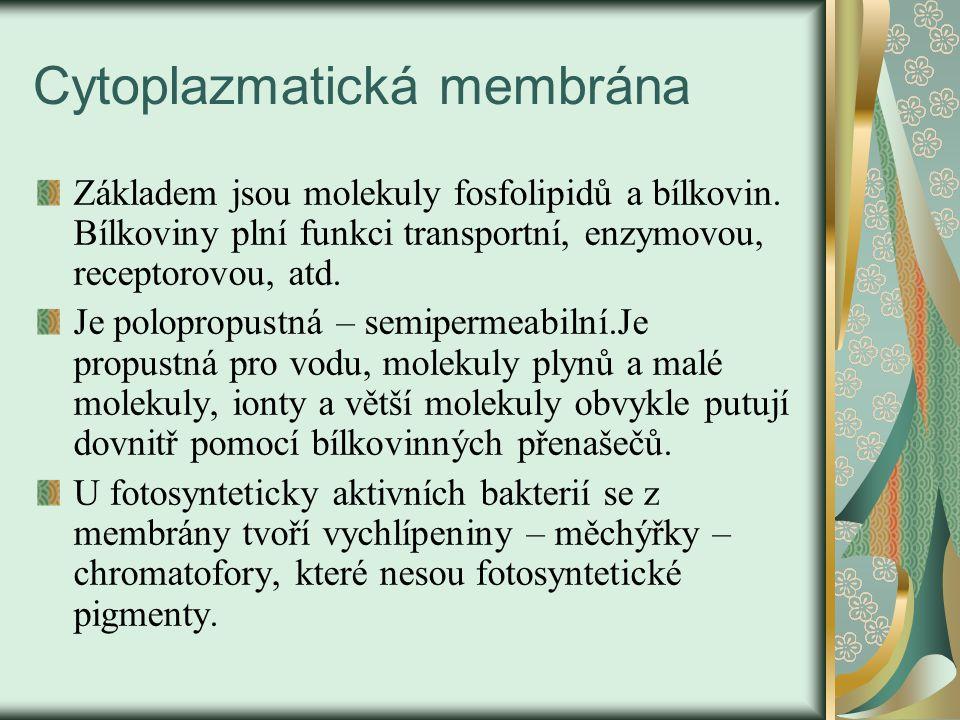 Cytoplazmatická membrána – obr.č.2.