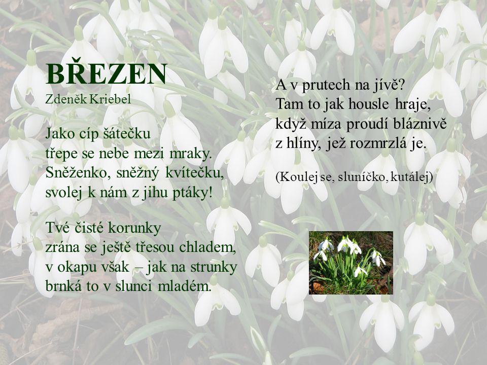 BŘEZEN Ivan Blatný Hleděl jsem včera ráno venku, jak slunce svítí na sněženku a ukazoval Mařence na keřích malé pupence.