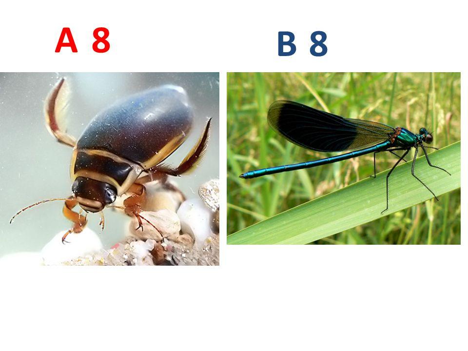 8 8 A B