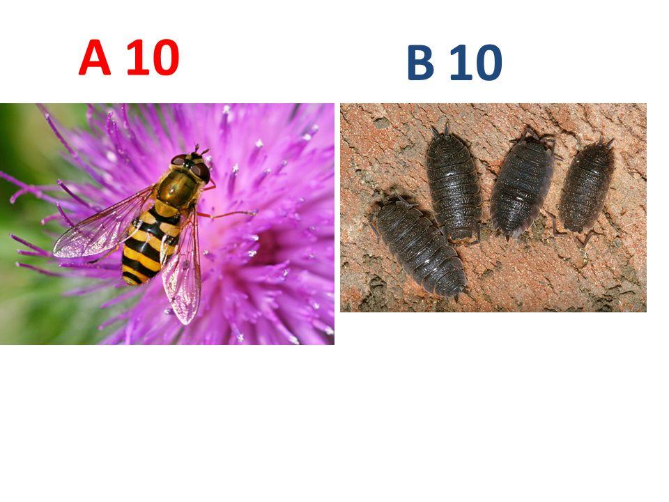 10 A B