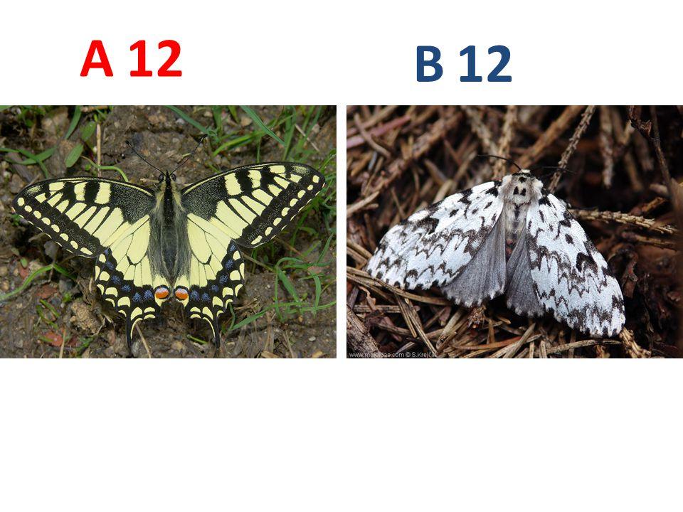 12 A B