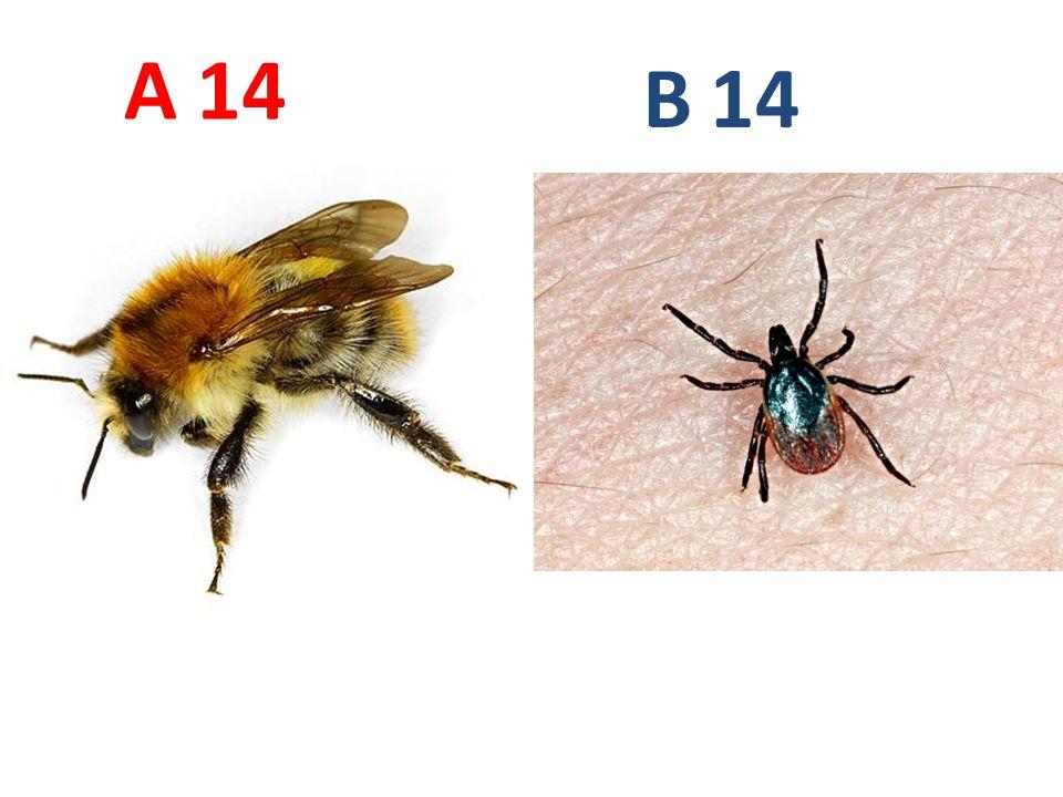 14 A B