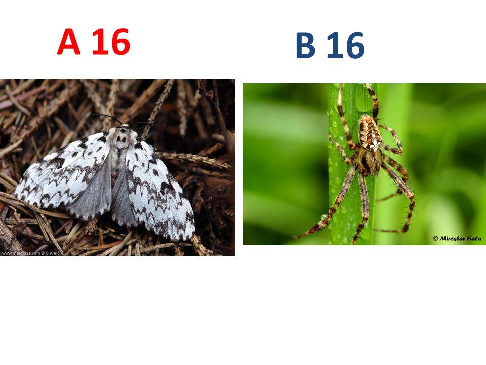 16 A B