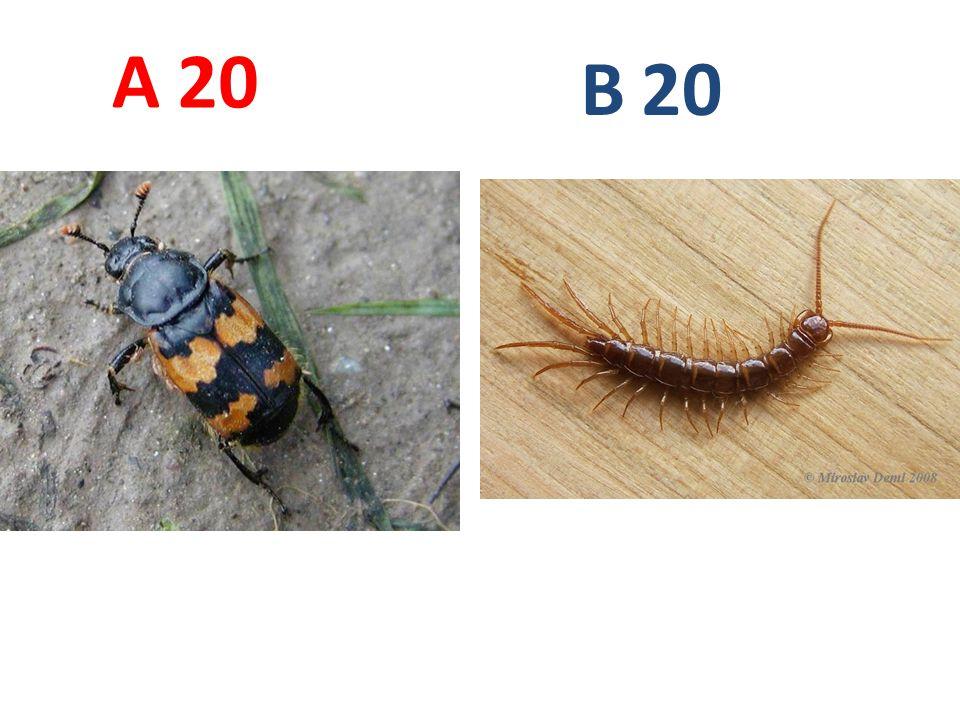 20 A B
