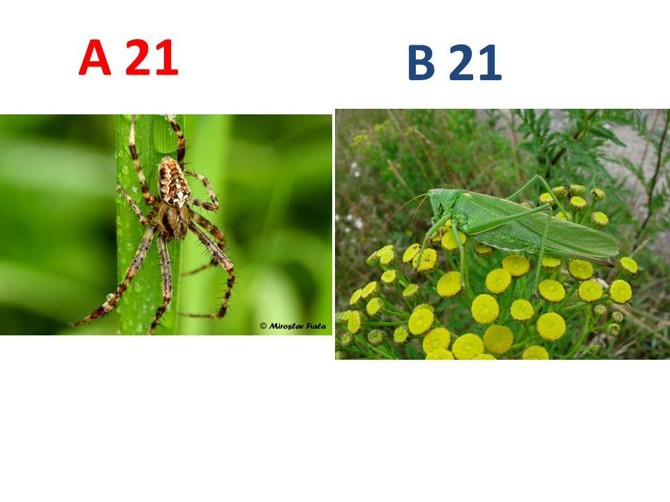21 A B