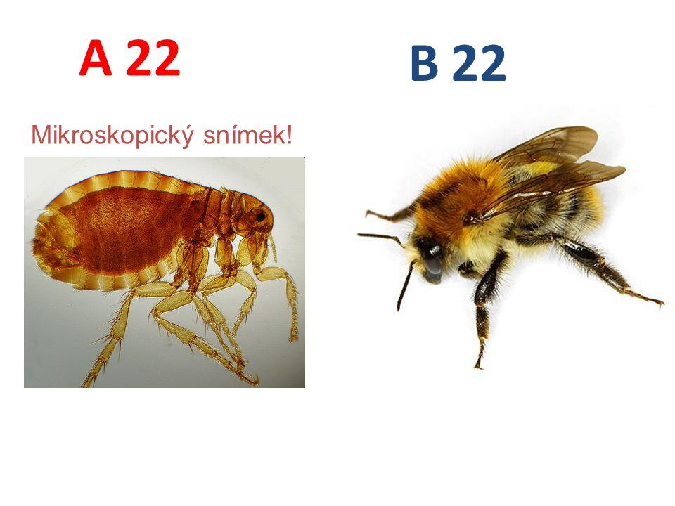 22 A B Mikroskopický snímek!