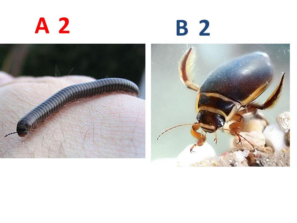 23 A B Mikroskopický snímek!