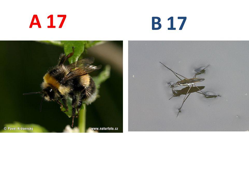 17 A B