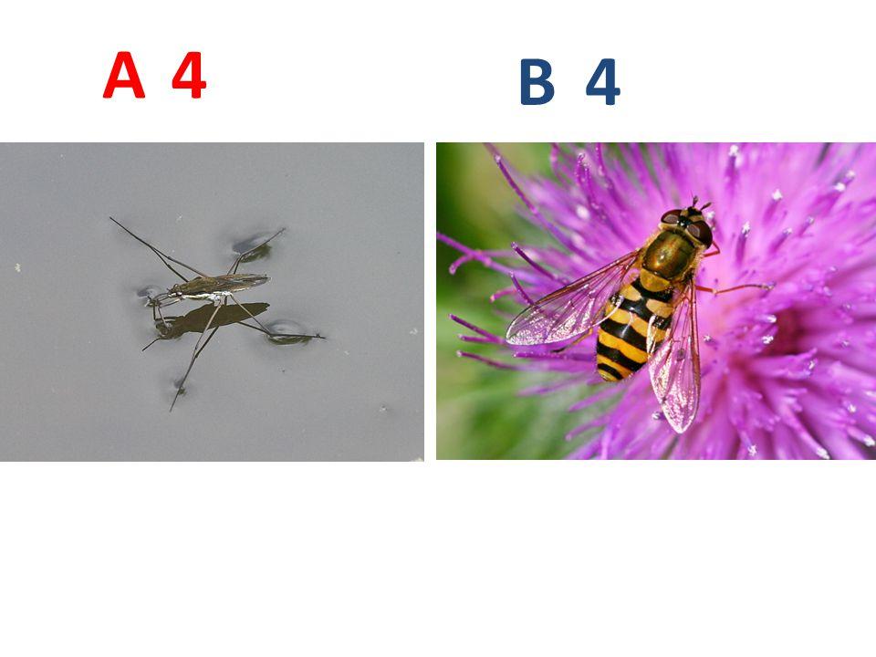 4 4 A B