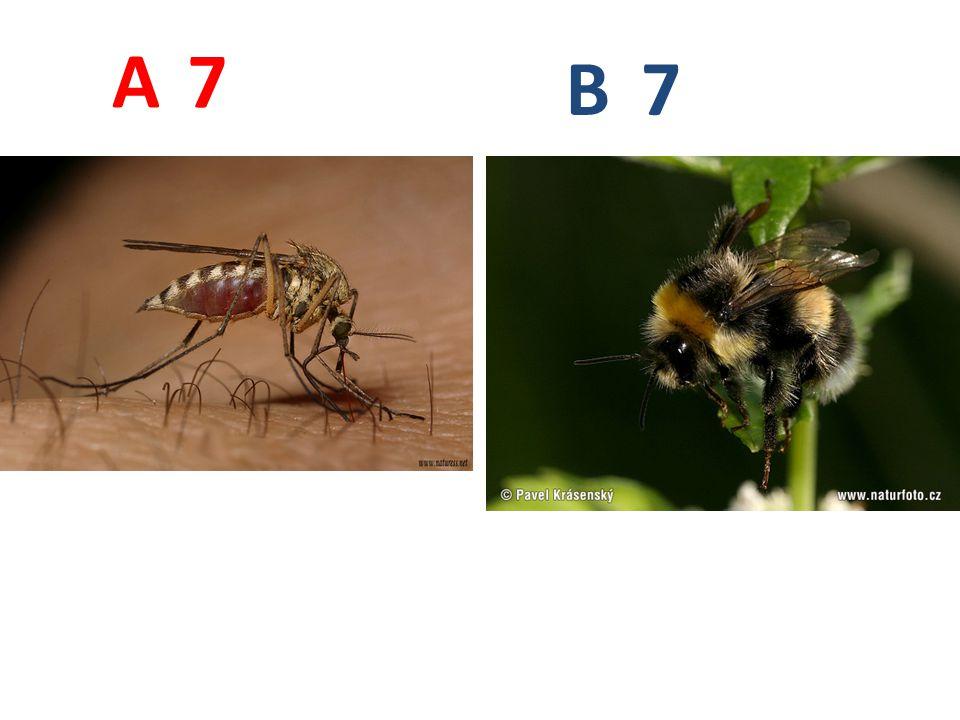 7 7 A B