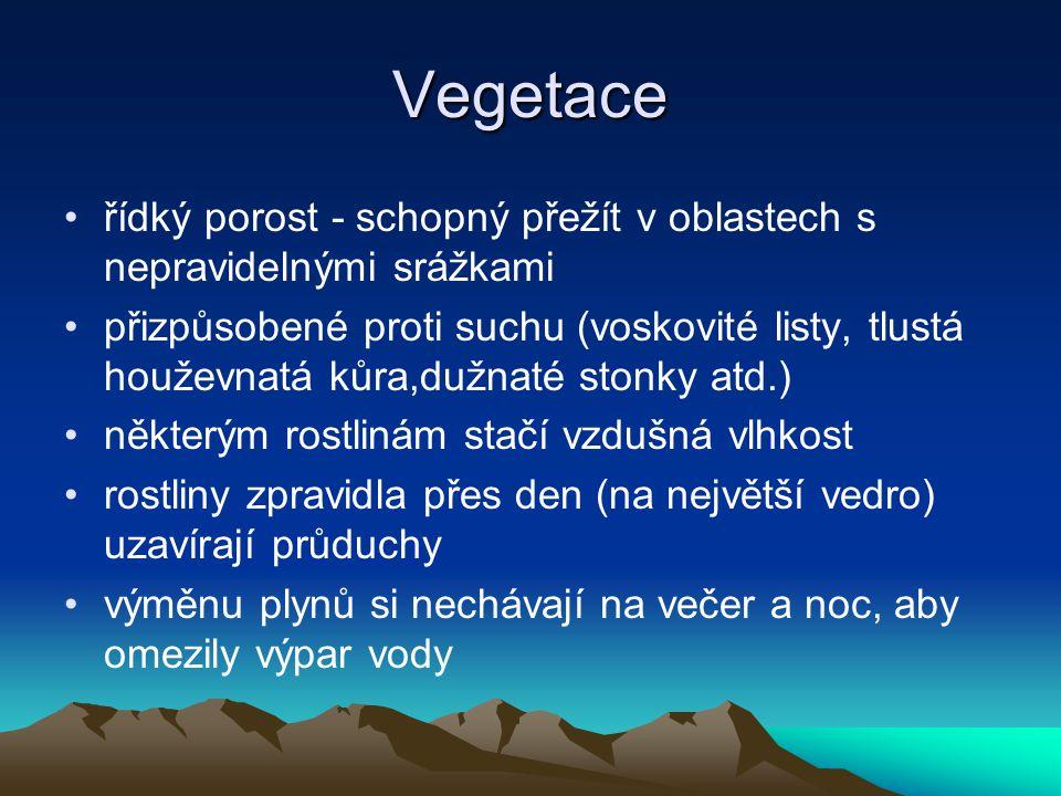 Vegetace řídký porost - schopný přežít v oblastech s nepravidelnými srážkami přizpůsobené proti suchu (voskovité listy, tlustá houževnatá kůra,dužnaté