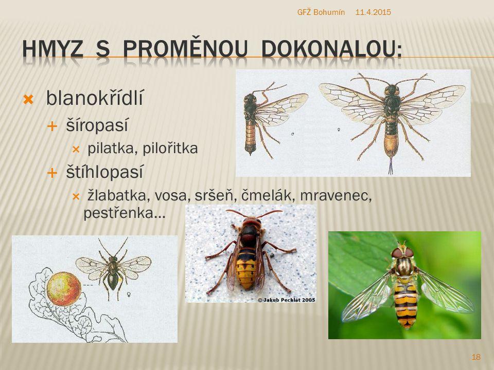  blanokřídlí  šíropasí  pilatka, pilořitka  štíhlopasí  žlabatka, vosa, sršeň, čmelák, mravenec, pestřenka… 11.4.2015 18 GFŽ Bohumín